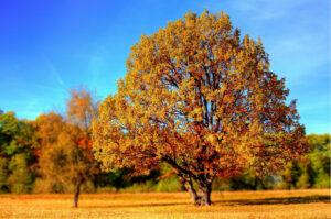Bäume im Herbst.